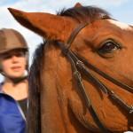 Manegeklant valt van steigerend paard