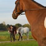 Vrouw omver gelopen door het paard van een ander